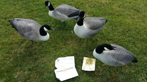 Goose Decoys For Sale >> Hardcore Goose Decoys For Sale In Los Gatos Ca Offerup