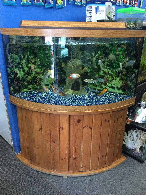 92 Best 80s Outfits Images On Pinterest: 92 Gallon Corner Bow Front Aquarium Fish Tank For Sale In