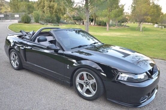 Terminator Mustang Meaning