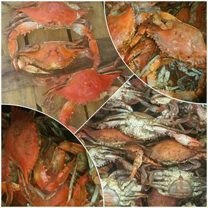 FRESH SEAFOOD DAILY. ( DELIVERY AVAILABLE TO DC & PG COUNTY for Sale in Washington, DC