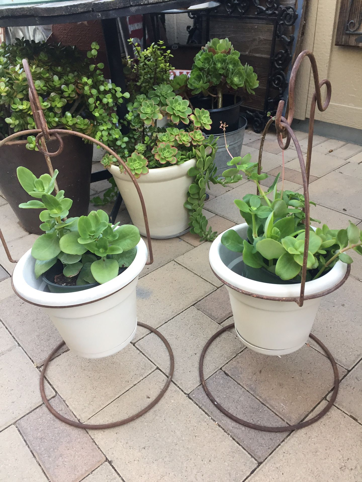Iron plant holders with pots and Succulents