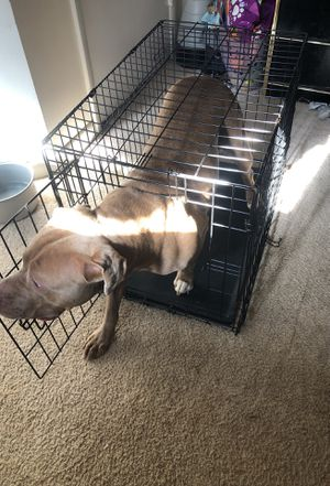 Dog cage for Sale in Silver Spring, MD