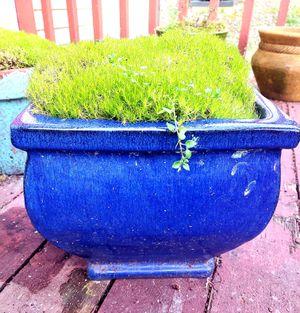 Photo Cobalt blue ceramic vase with moss