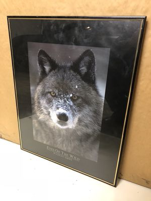 Beautiful wolf photo framed for Sale in Denver, CO