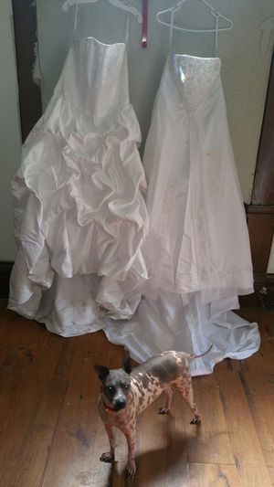 David's Bridal Dresses for Sale in Pittsburgh, PA
