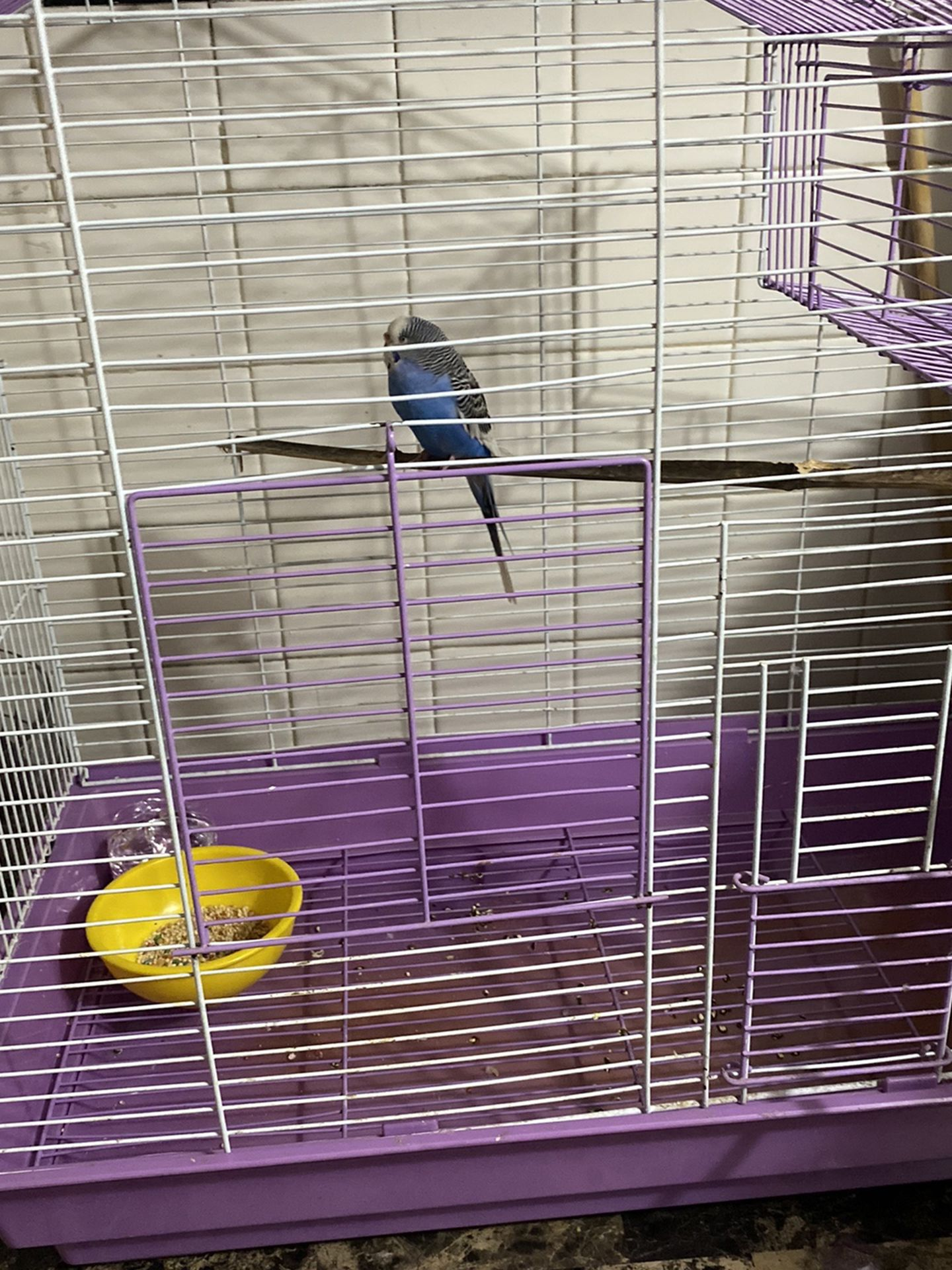 Budgerigar Bird And Cage
