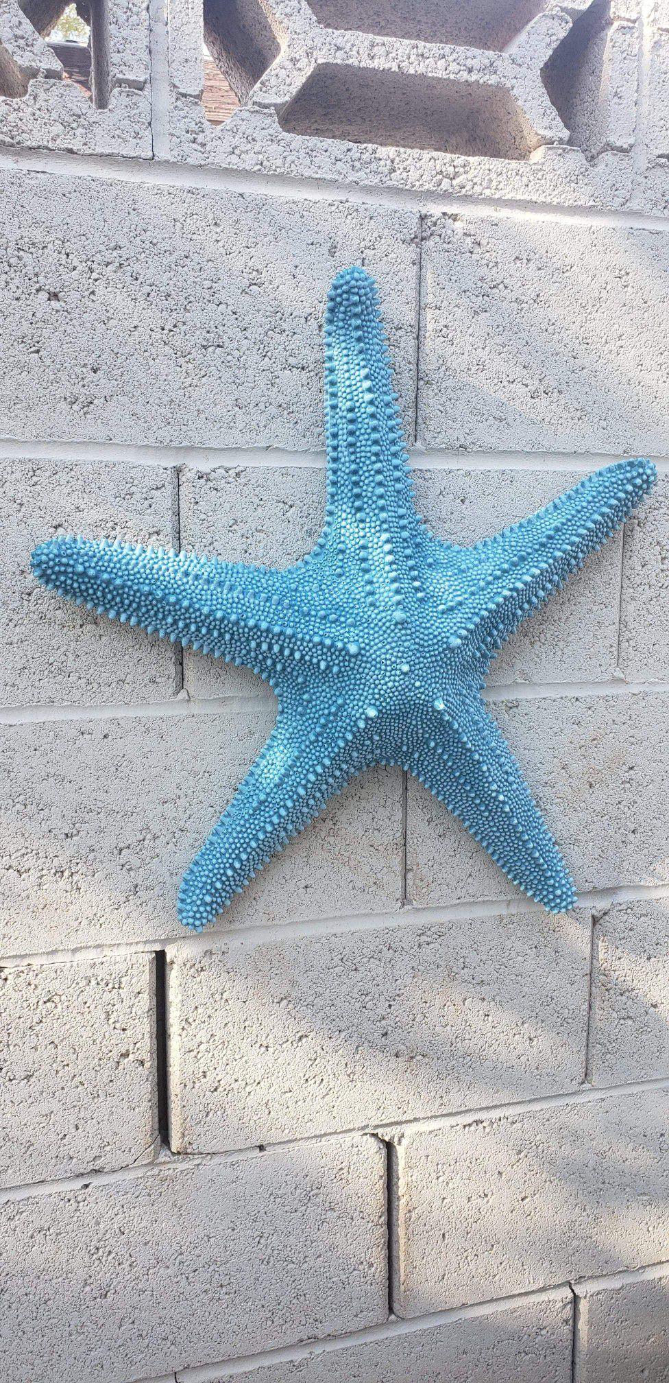 Starfish / Concrete wall decor