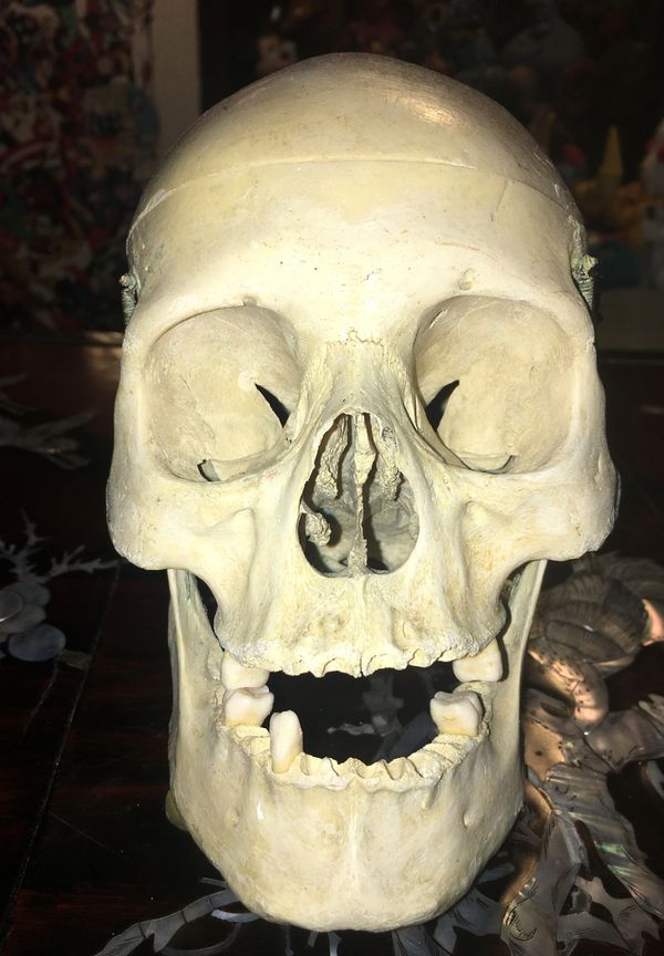1920s-1930s Real HUMAN SKULL Medical School Teaching Tool for Sale in San  Jose, CA - OfferUp