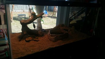 Bearded dragon with complete settup Thumbnail