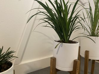 House Plants Planters and Stands Set Of 3 Thumbnail