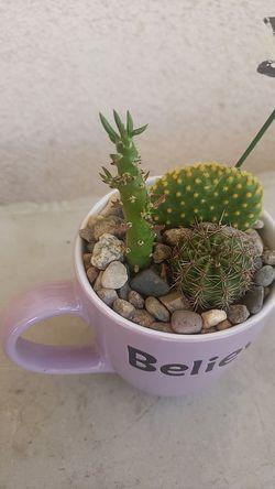 Plantas Thumbnail