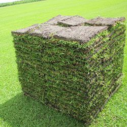 Pallet Of Sod For Sale In Lake Worth Fl Offerup