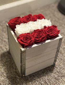 Roses preserved Thumbnail