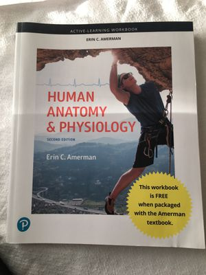 Human Anatomy and Physiology. Erin C. Amerman 2nd edition for Sale in Fairfax, VA