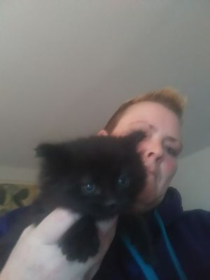 2 Free 6 wk old black kittens for Sale in Baltimore, MD