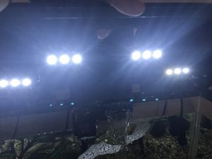 20 gallons fish tank with LED hood, filter, and heater for Sale in Vienna, VA