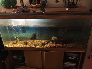 55gal tank with stand for Sale in Orlando, FL