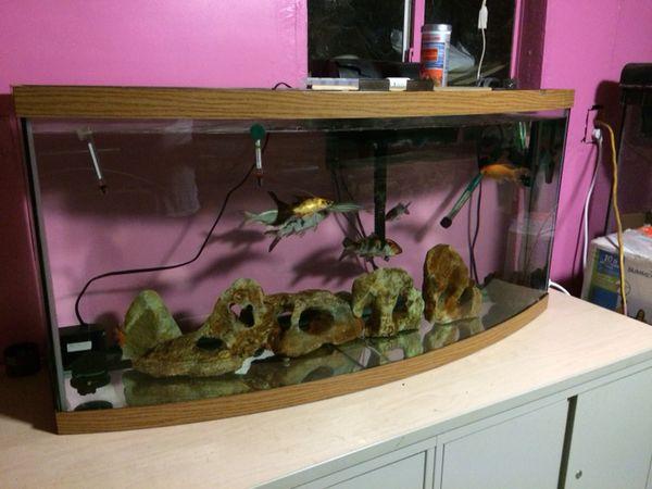 72 Gallons Bow Front Aquarium Fish Tank For Sale In Delano Ca