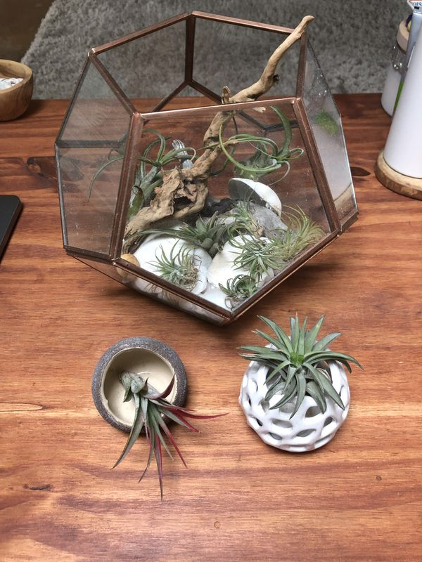 Air Plant Terrarium And Small Holders Seattle
