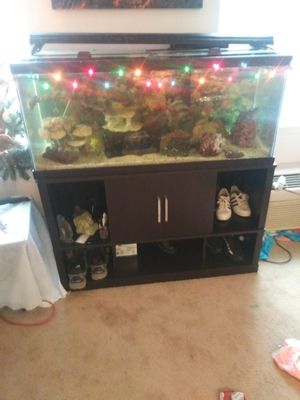 75 Gallon Fresh Water tank with stand and fish for Sale in Washington, DC