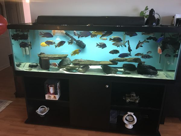 African Cichlid Aquarium 125 Gallon For Sale In Parkville Md Offerup