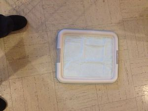 Small dog potty training tray for Sale in Silver Spring, MD