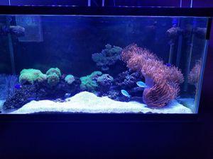 Photo Saltwater aquarium