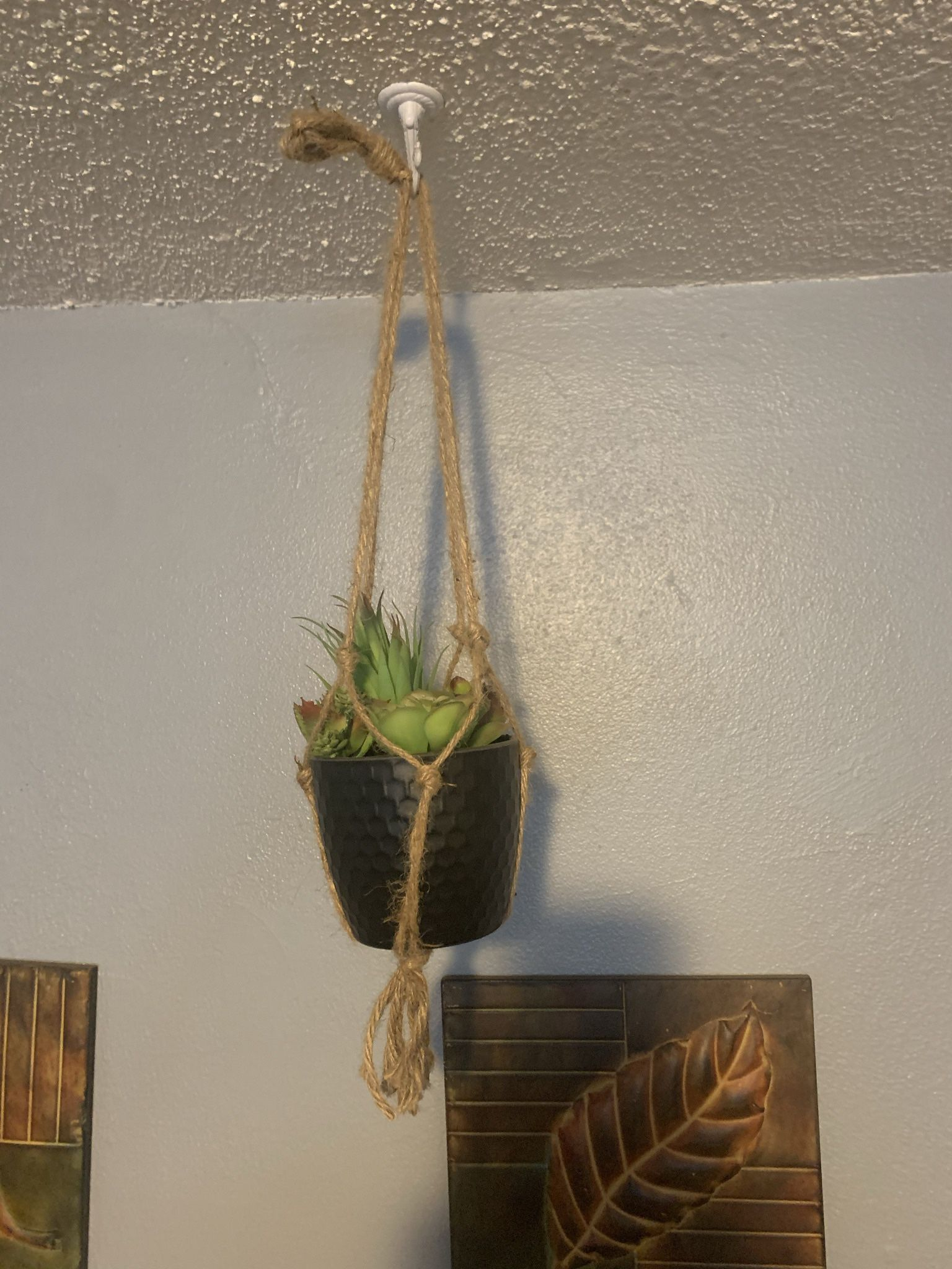 Decorative hanging Plants