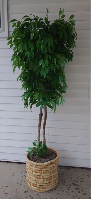 Decorative fake tree for Sale in St. Louis, MO