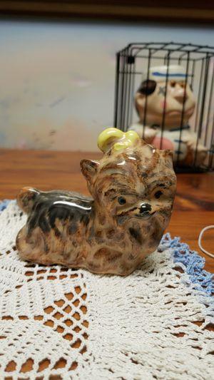 Yorkie for Sale in Dunedin, FL