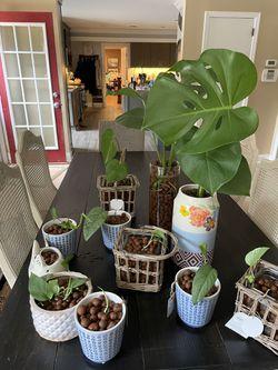 House Plants  Thumbnail