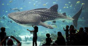 Georgia Aquarium Tickets ONLY $20!!! for Sale in Atlanta, GA