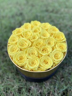 Preserved rose box Thumbnail