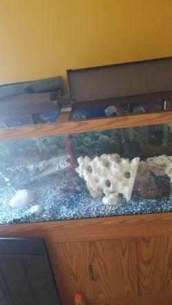 75 gallon fresh water aquarium Thumbnail