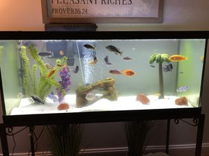 75-Gallon Fish Tank Aquarium for Sale in Ashburn, VA