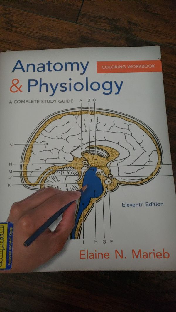 Anatomy and physiology coloring book for Sale in Phoenix, AZ - OfferUp