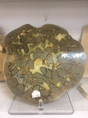 Huge septarian nodule for Sale in Salt Lake City, UT