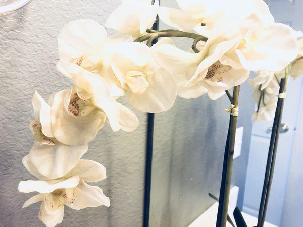 Silk flowers phoenix az best silk 2018 blooming flowers 31 w lone cactus dr ste 5 phoenix az 85027 yp com mightylinksfo