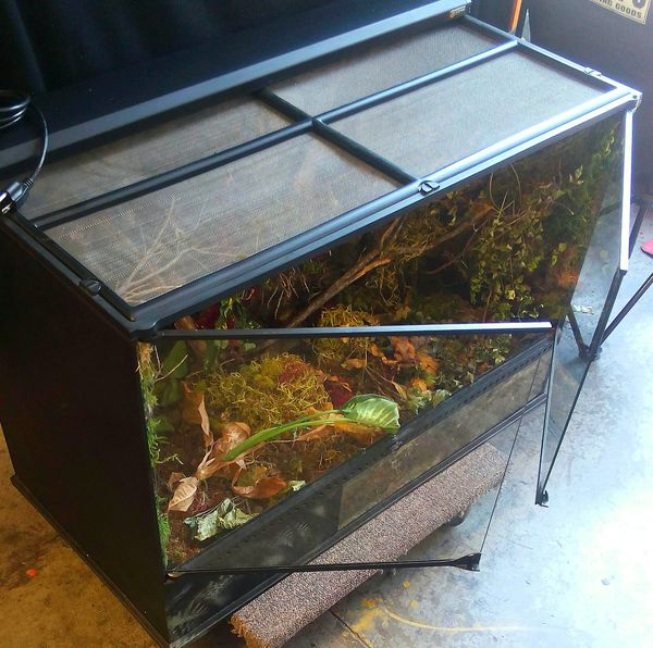 Exo Terra Large Glass Terrarium Paid 300 Large Low 36 L X 18