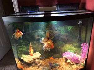 Fish Tank with 9 Goldfish for Sale in Silver Spring, MD