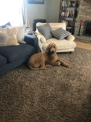 Photo Rug-not the dog