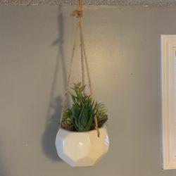 Decorative hanging Plants Thumbnail