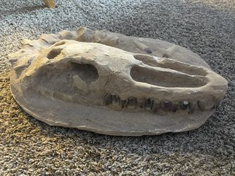 Alligator Fossil  Thumbnail