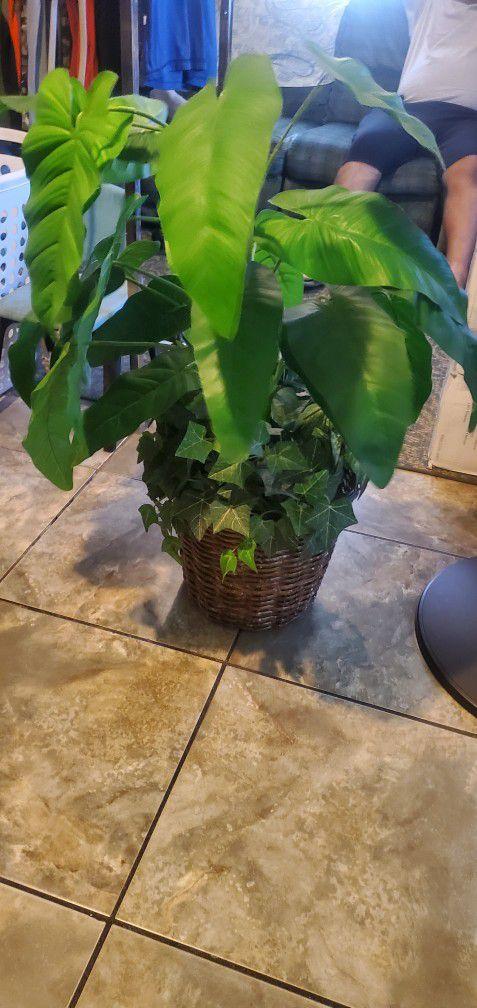 Fake Plant And 2 Big Angel
