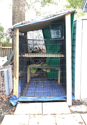 Large Dog Kennel Turned Into A Kitten Home For In Myrtle Beach Sc