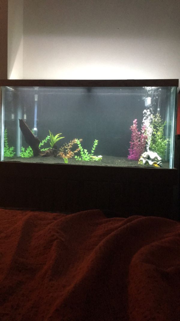 100 gallon fish tank for Sale in San Marcos, TX - OfferUp