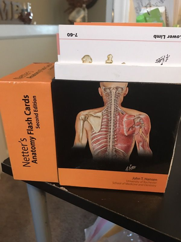 Netters Human Anatomy Flashcards Medicine For Sale In Hummelstown