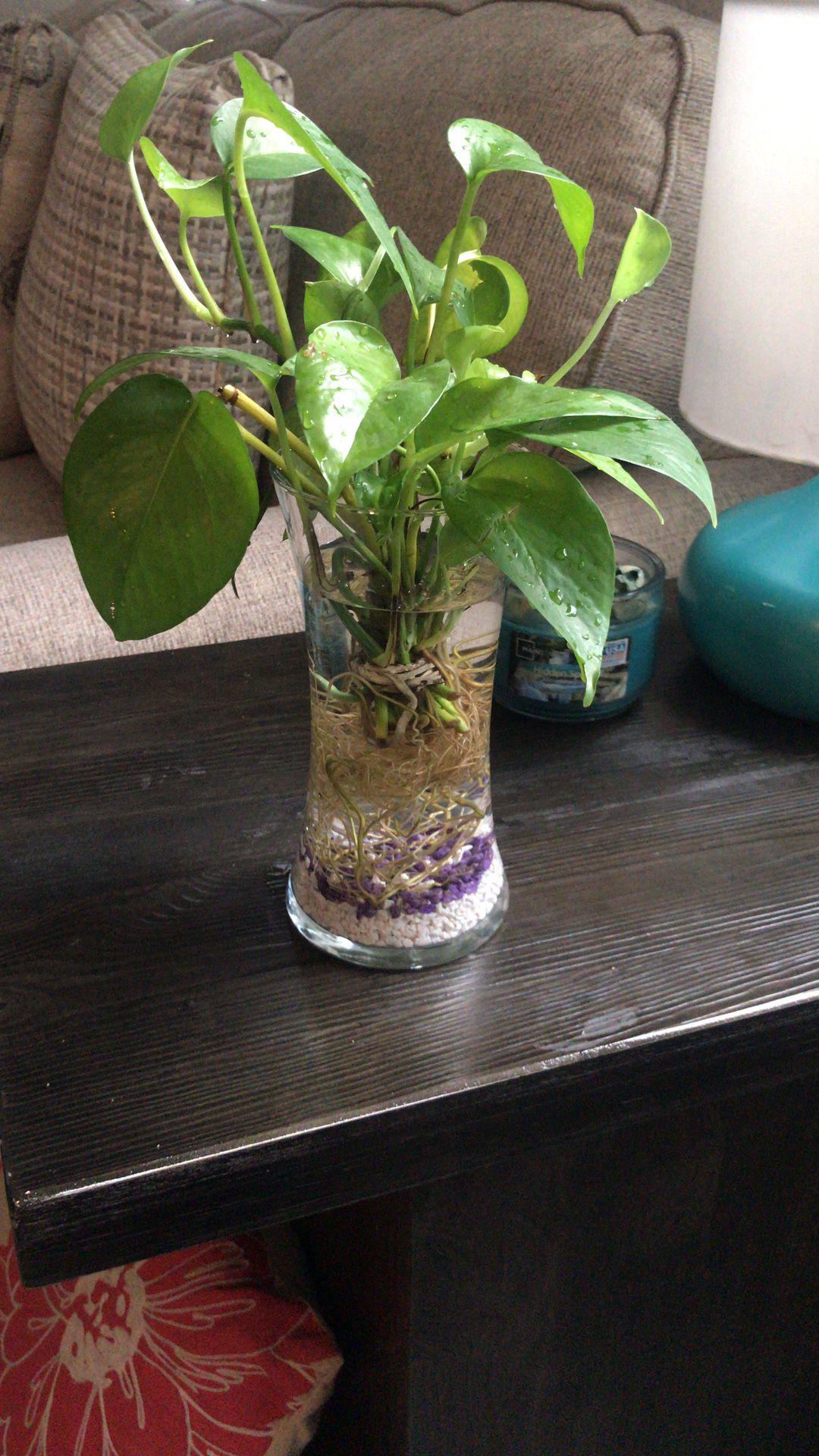 Plant with vase