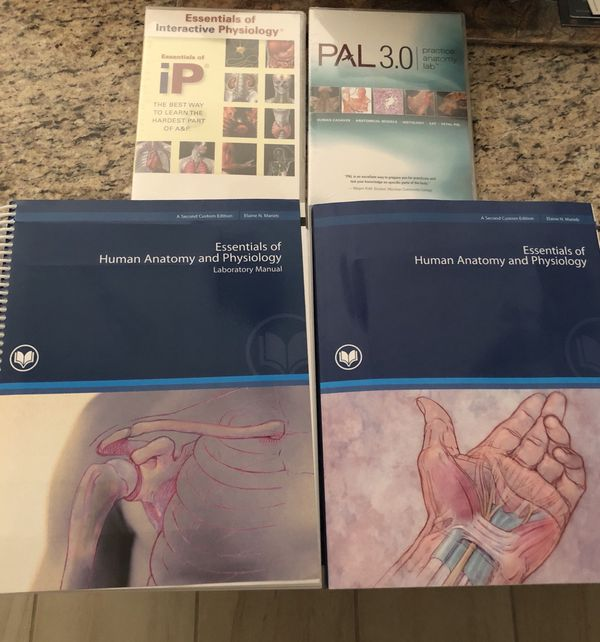 Essentials Of Human Anatomy And Physiology For Sale In Queen Creek