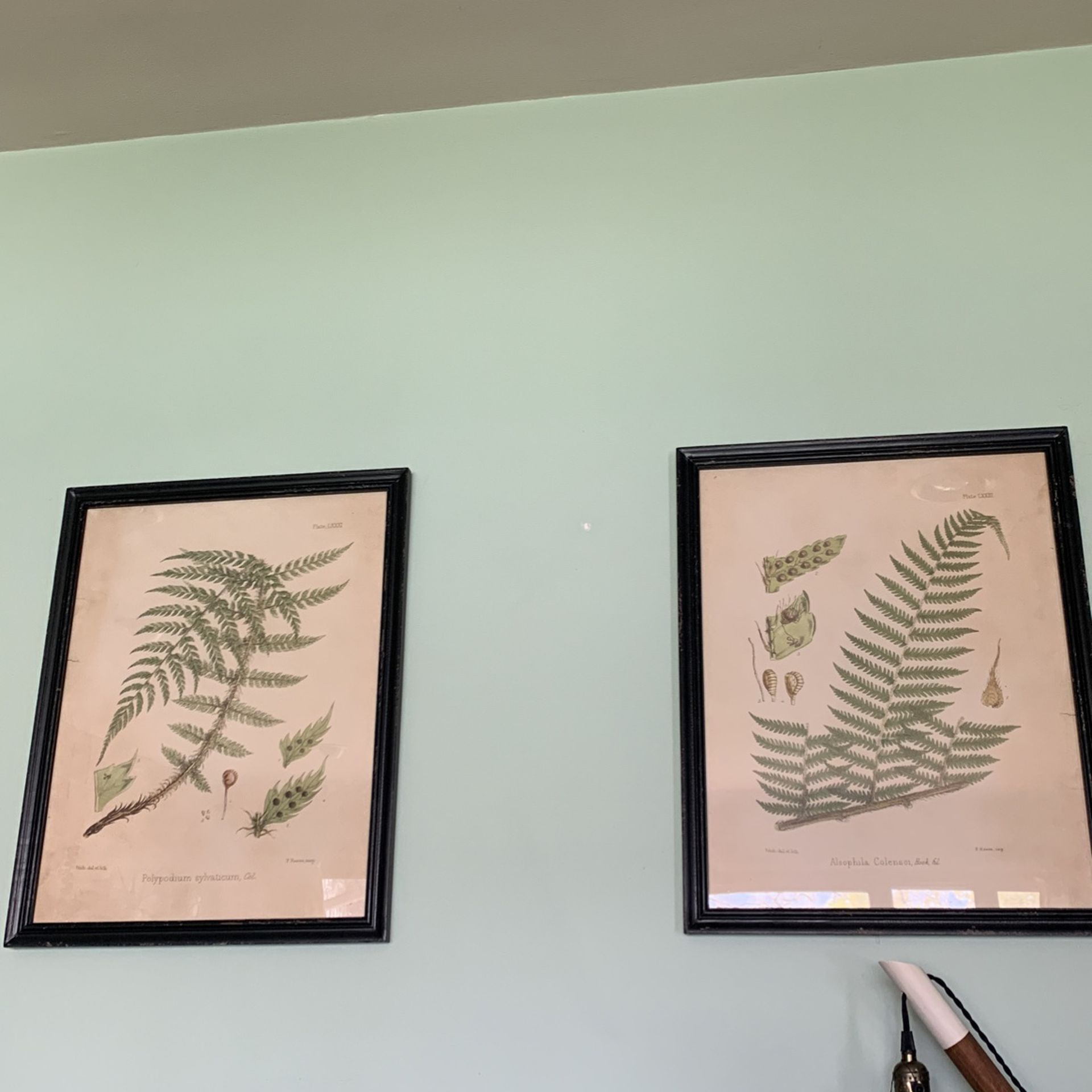 Fern Framed Pictures (set of 2)